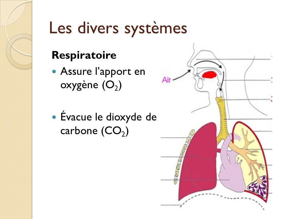 Les divers systèmes Respiratoire Assure l'apport en oxygène (O2)
