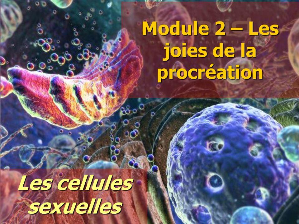 Module 2 – Les joies de la procréation