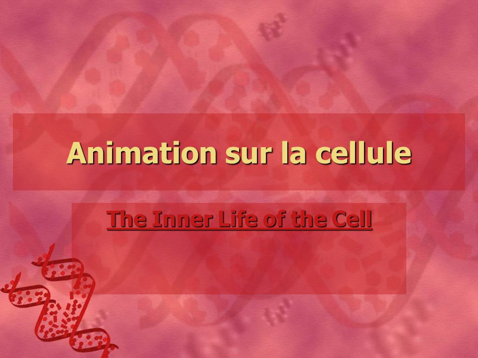 Animation sur la cellule