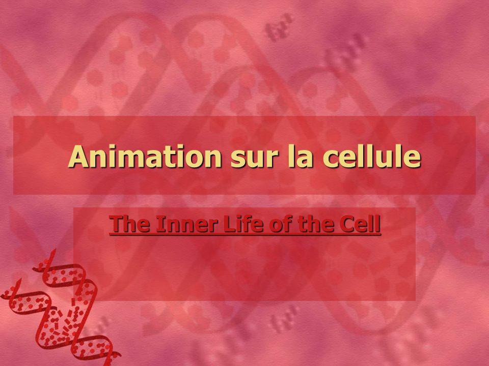 Animation sur la cellule