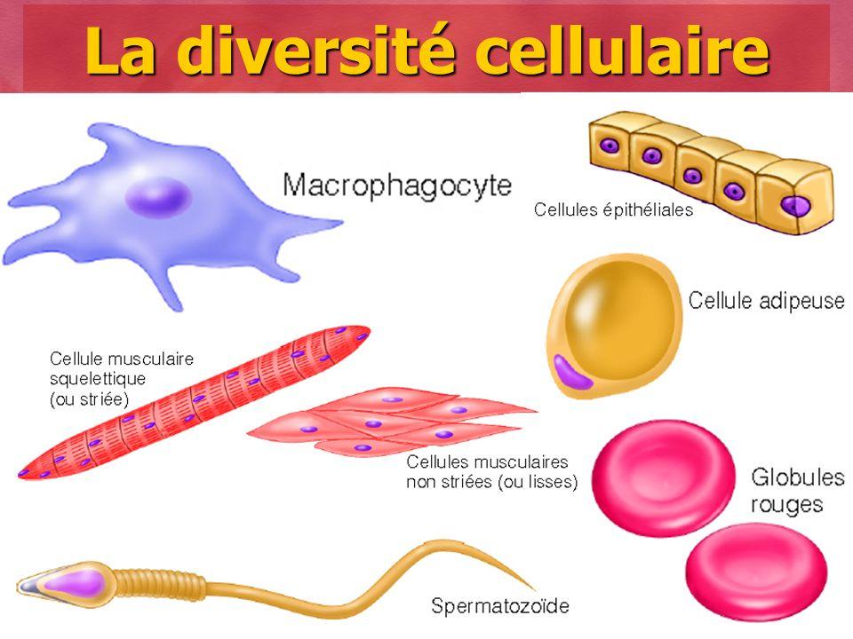La diversité cellulaire
