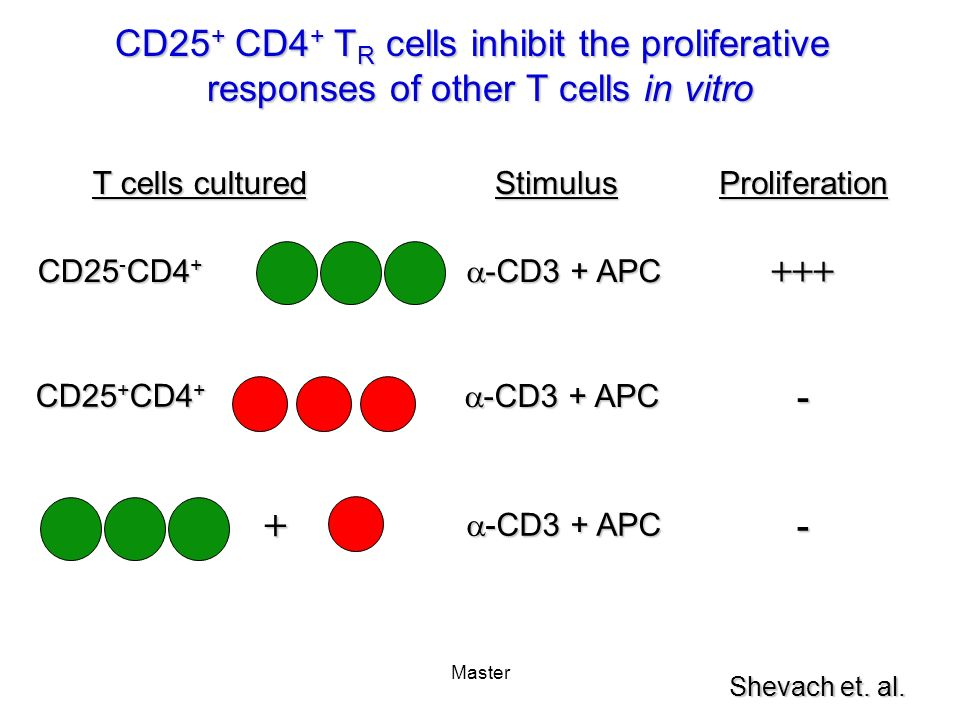 + CD25+ CD4+ TR cells inhibit the proliferative