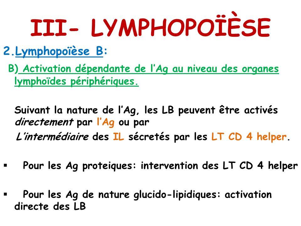 III- LYMPHOPOÏÈSE 2.Lymphopoïèse B: