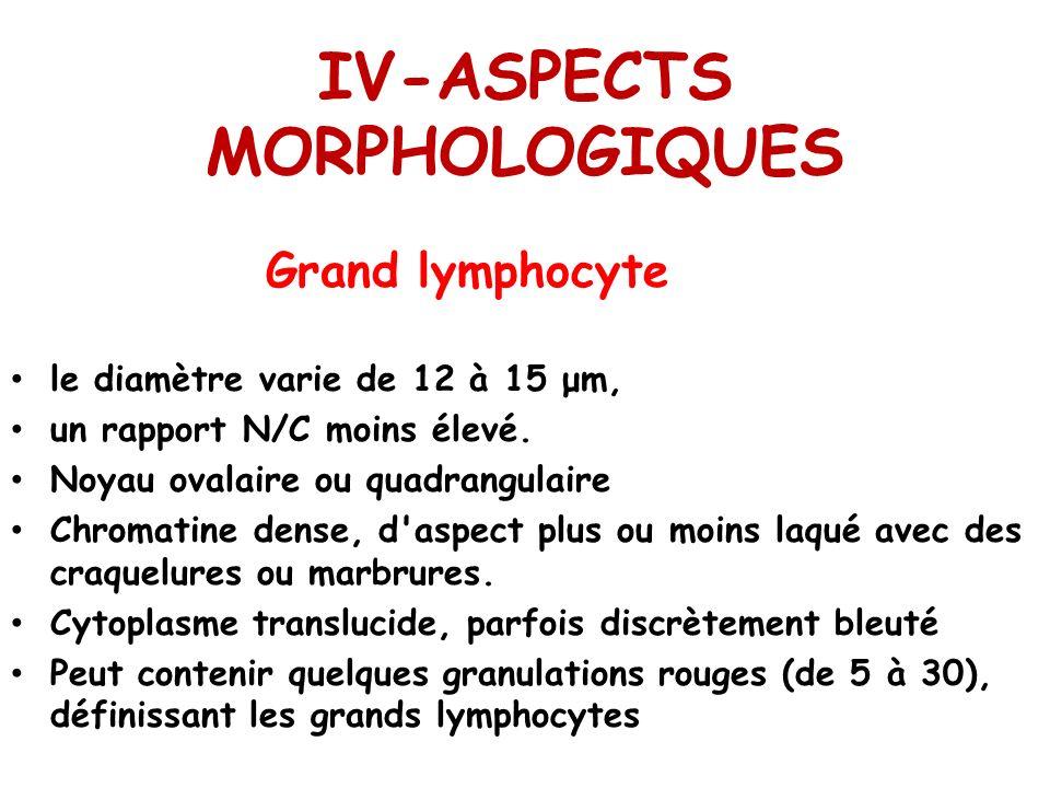IV-ASPECTS MORPHOLOGIQUES
