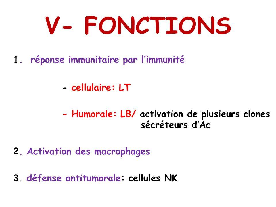 V- FONCTIONS 1. réponse immunitaire par l'immunité - cellulaire: LT