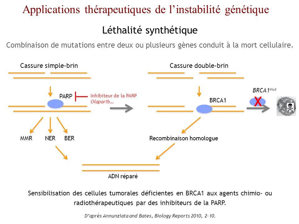 X Applications thérapeutiques de l'instabilité génétique
