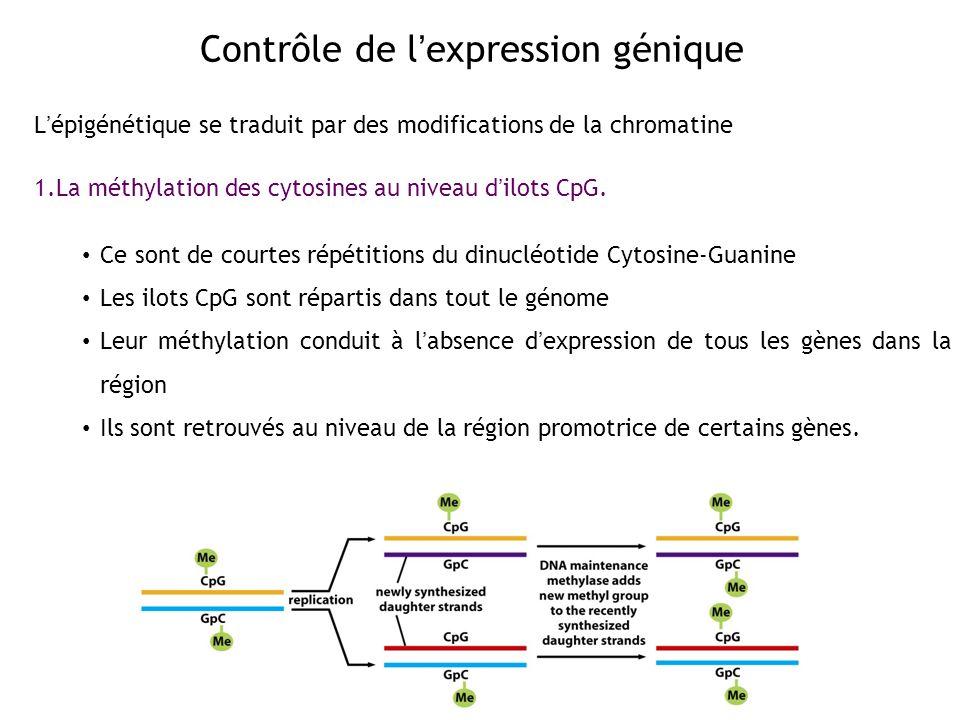 Contrôle de l'expression génique