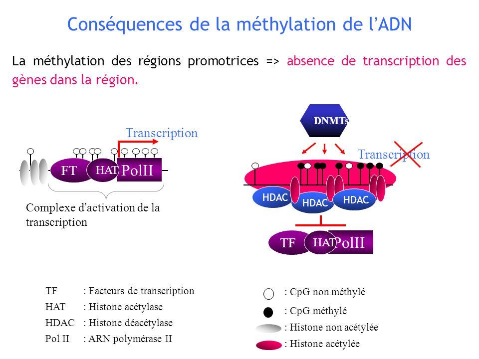 Conséquences de la méthylation de l'ADN