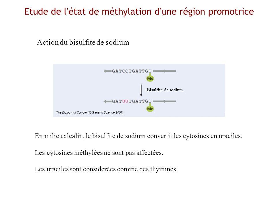 Etude de l'état de méthylation d'une région promotrice