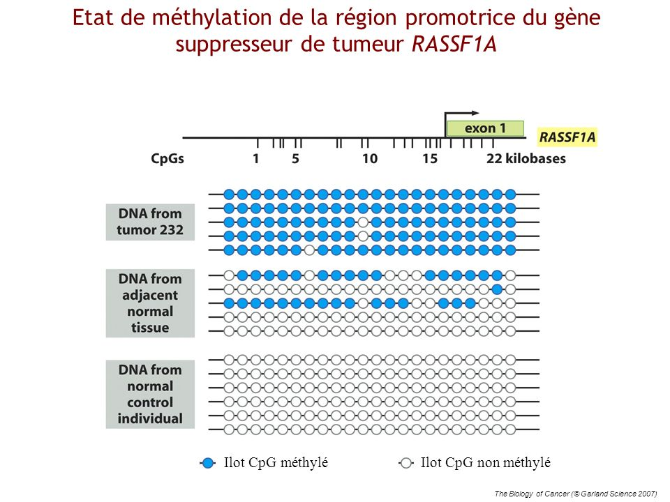 Etat de méthylation de la région promotrice du gène suppresseur de tumeur RASSF1A