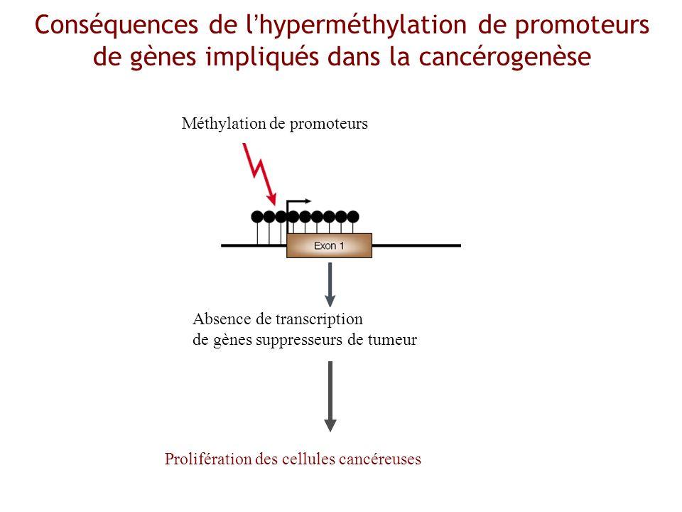 Conséquences de l'hyperméthylation de promoteurs de gènes impliqués dans la cancérogenèse