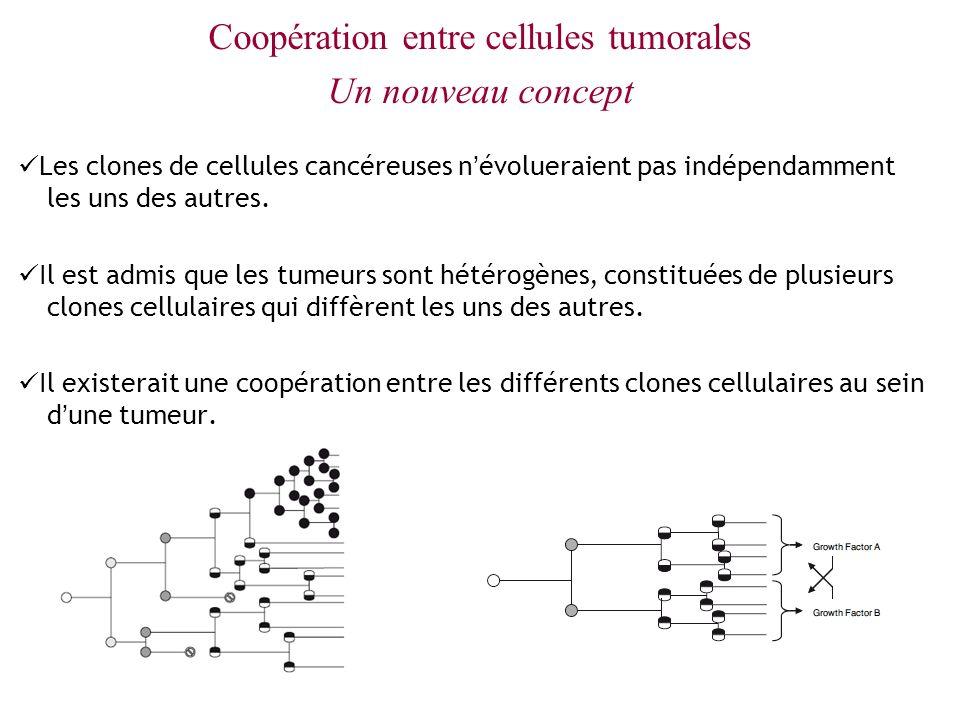 Coopération entre cellules tumorales