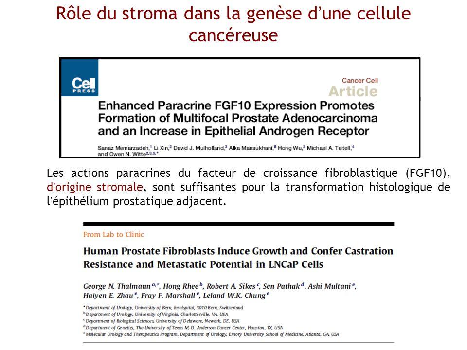Rôle du stroma dans la genèse d'une cellule cancéreuse