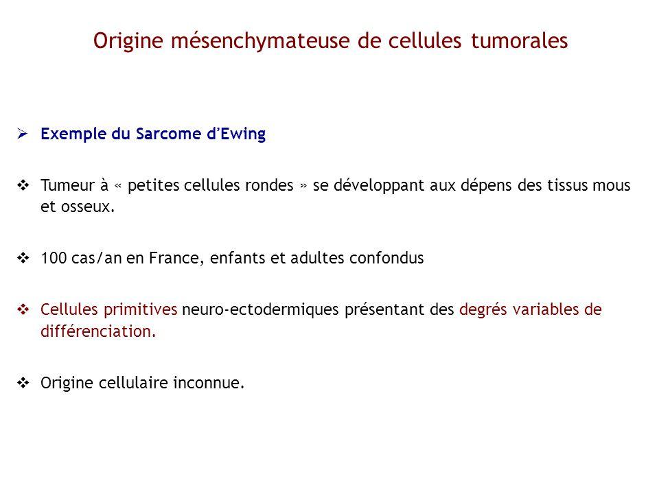 Origine mésenchymateuse de cellules tumorales