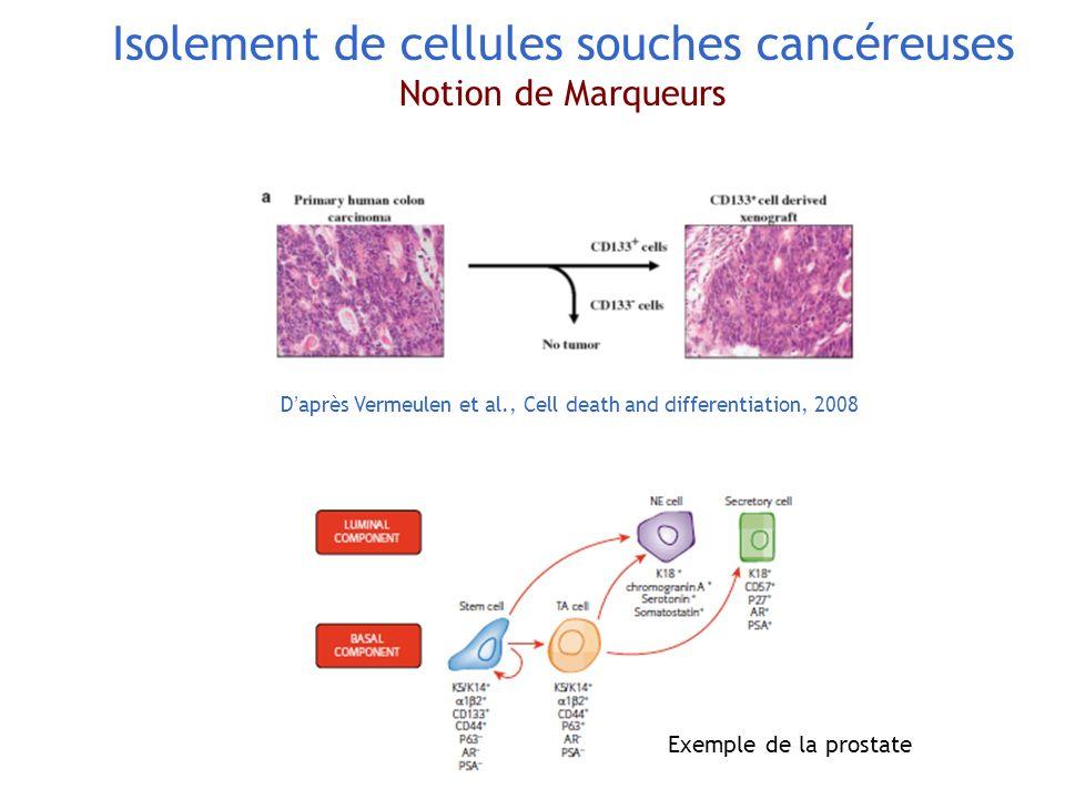 Isolement de cellules souches cancéreuses