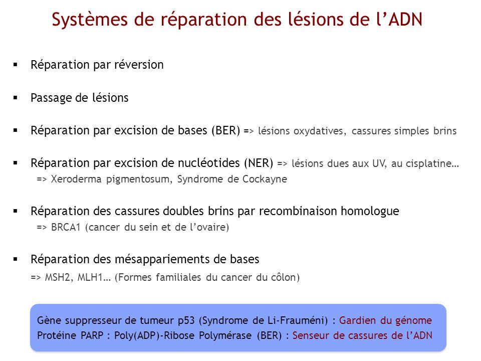 Systèmes de réparation des lésions de l'ADN