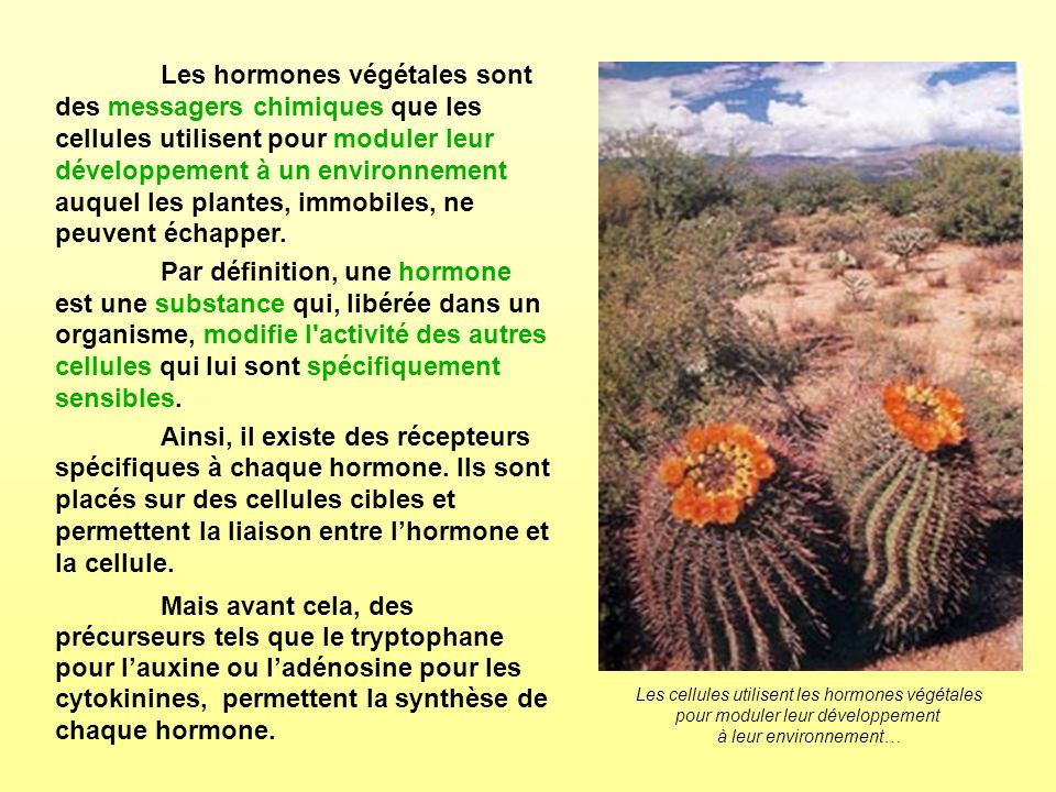 Les hormones végétales sont des messagers chimiques que les cellules utilisent pour moduler leur développement à un environnement auquel les plantes, immobiles, ne peuvent échapper.