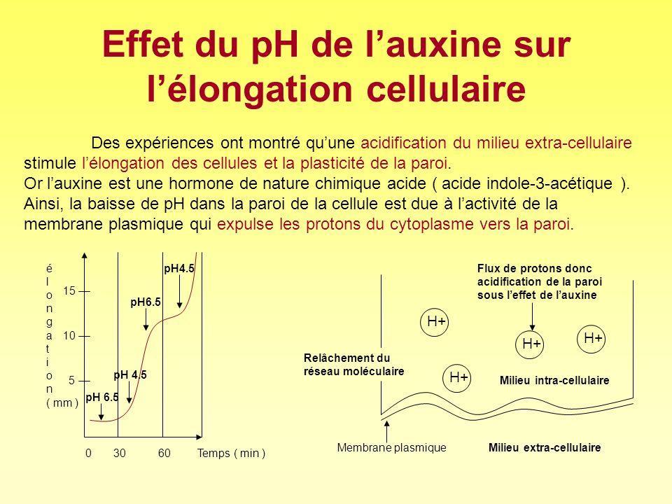 Effet du pH de l'auxine sur l'élongation cellulaire