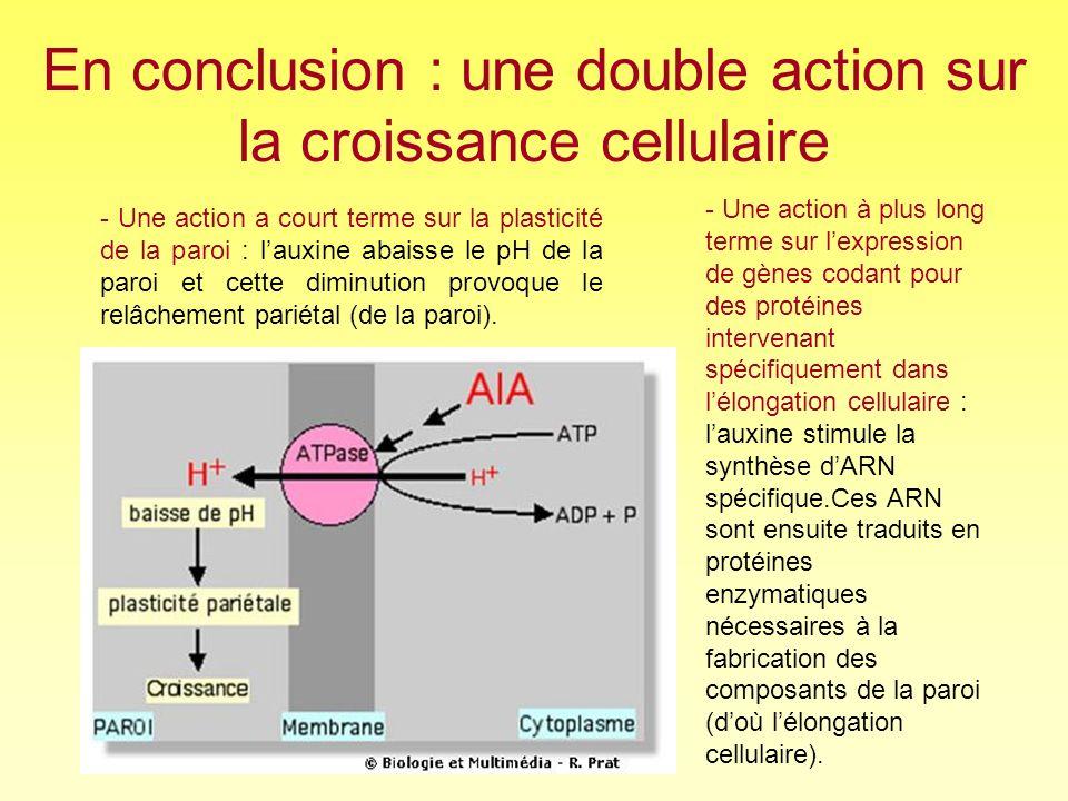 En conclusion : une double action sur la croissance cellulaire
