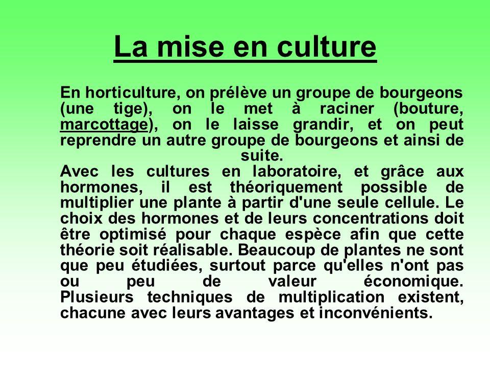 La mise en culture