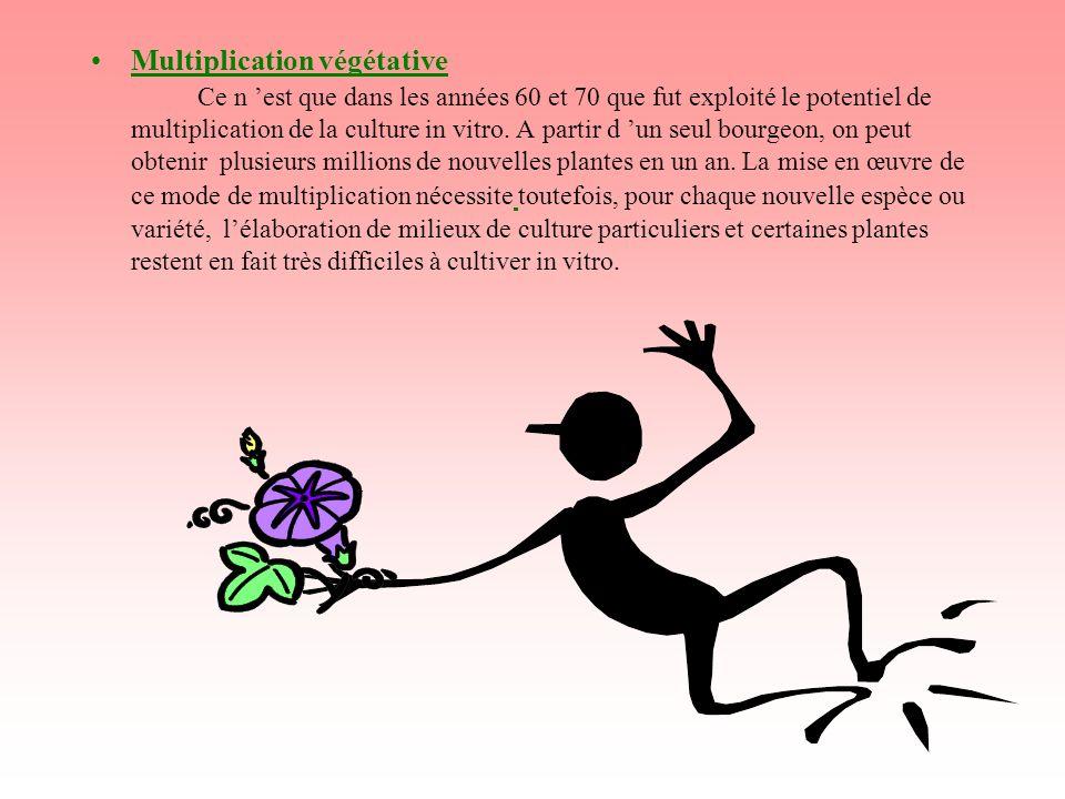 Multiplication végétative