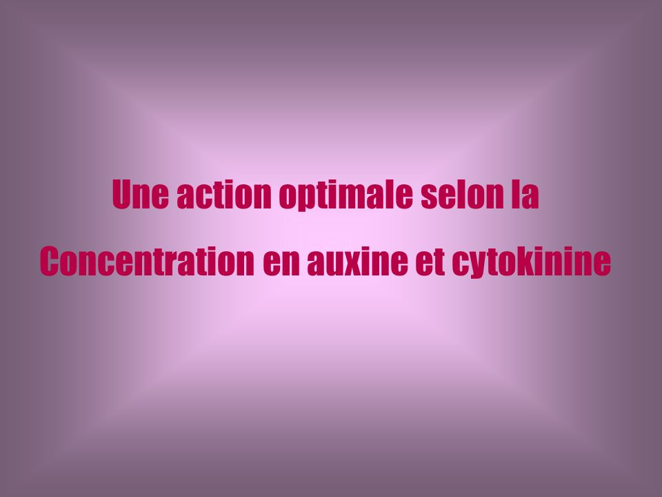 Une action optimale selon la Concentration en auxine et cytokinine