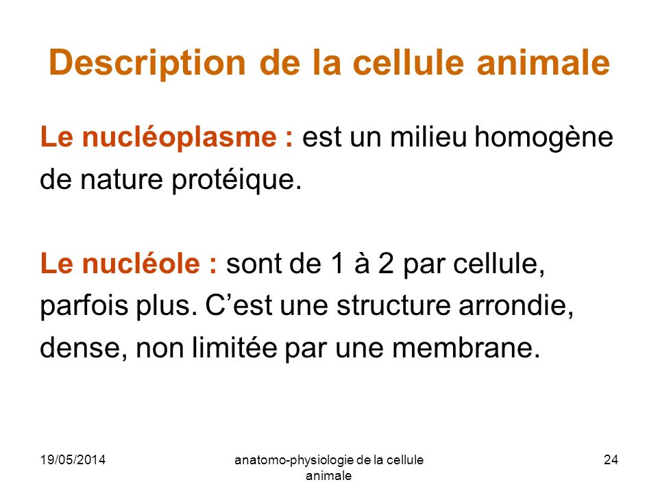 Description de la cellule animale