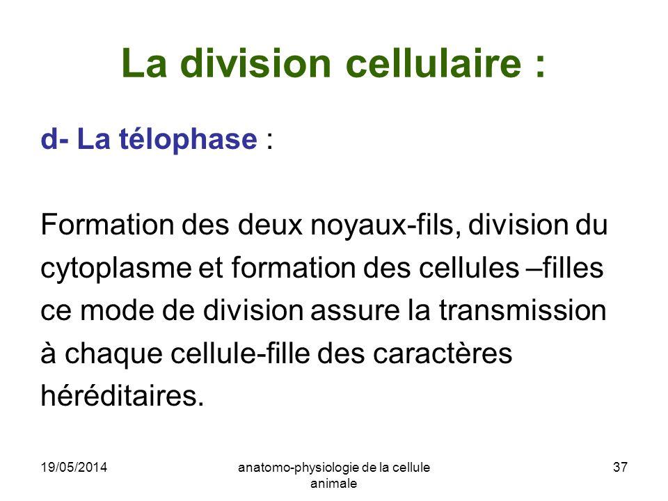 La division cellulaire :