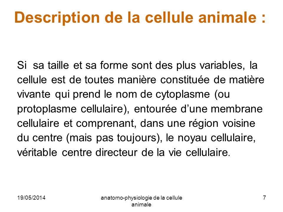 Description de la cellule animale :