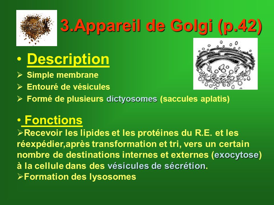 3.Appareil de Golgi (p.42) Description Fonctions