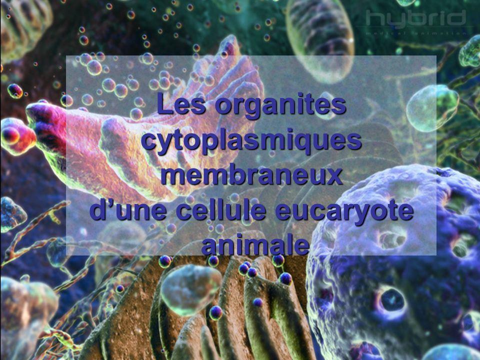 Les organites cytoplasmiques membraneux d'une cellule eucaryote animale
