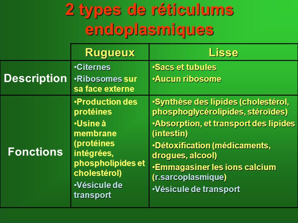 2 types de réticulums endoplasmiques