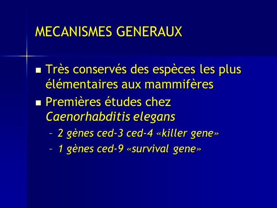 MECANISMES GENERAUX Très conservés des espèces les plus élémentaires aux mammifères. Premières études chez Caenorhabditis elegans.