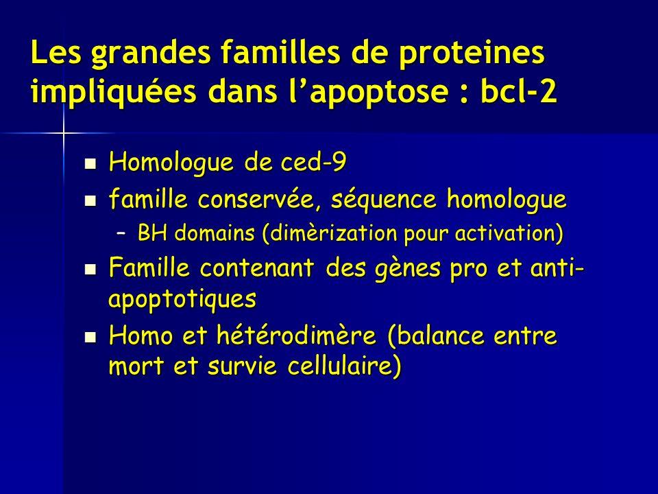 Les grandes familles de proteines impliquées dans l'apoptose : bcl-2