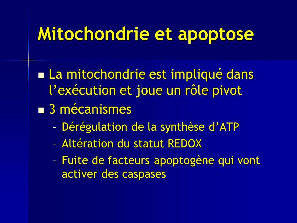 Mitochondrie et apoptose