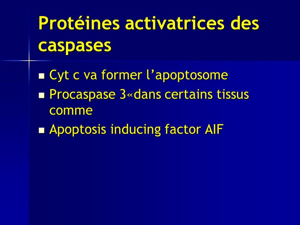 Protéines activatrices des caspases