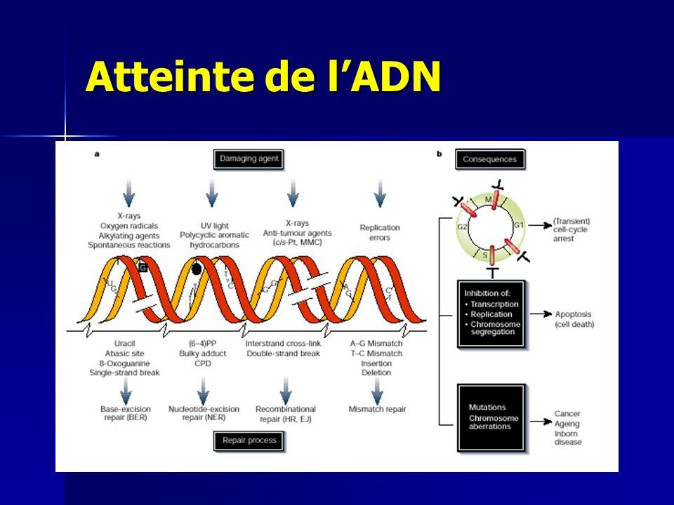Atteinte de l'ADN