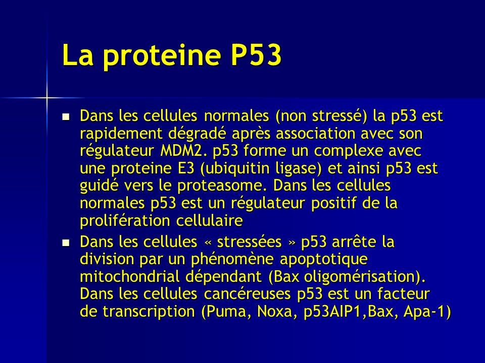 La proteine P53