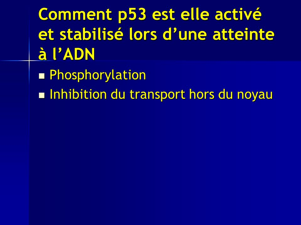 Comment p53 est elle activé et stabilisé lors d'une atteinte à l'ADN