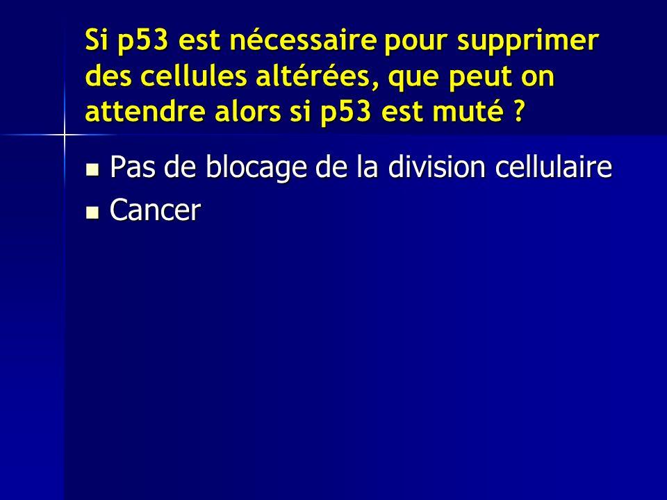 Si p53 est nécessaire pour supprimer des cellules altérées, que peut on attendre alors si p53 est muté