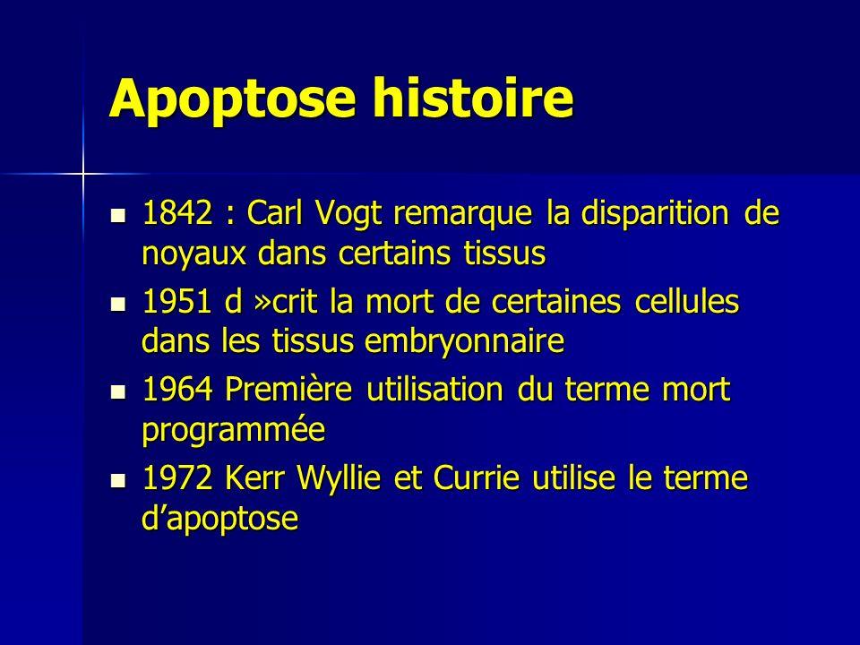 Apoptose histoire 1842 : Carl Vogt remarque la disparition de noyaux dans certains tissus.