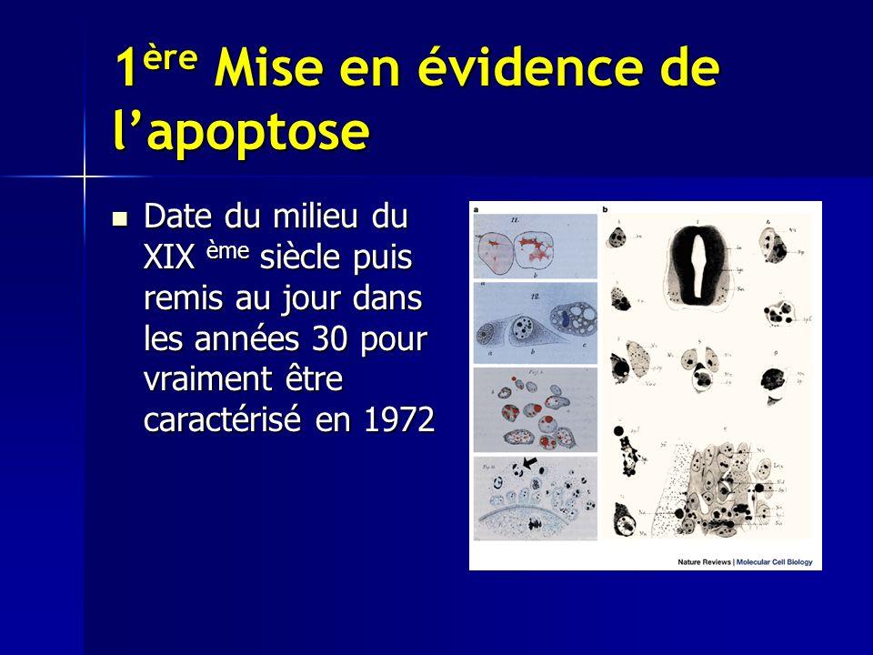 1ère Mise en évidence de l'apoptose