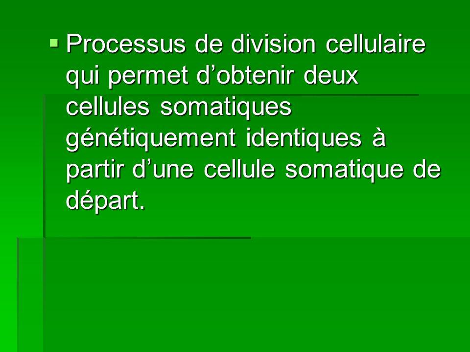 Processus de division cellulaire qui permet d'obtenir deux cellules somatiques génétiquement identiques à partir d'une cellule somatique de départ.