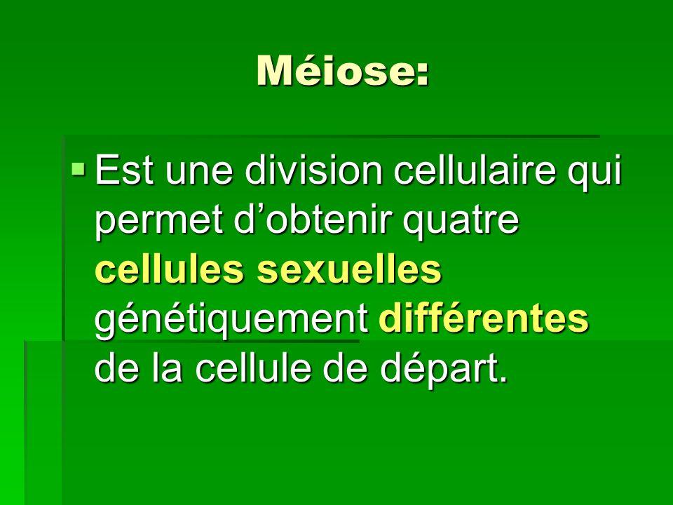 Méiose: Est une division cellulaire qui permet d'obtenir quatre cellules sexuelles génétiquement différentes de la cellule de départ.