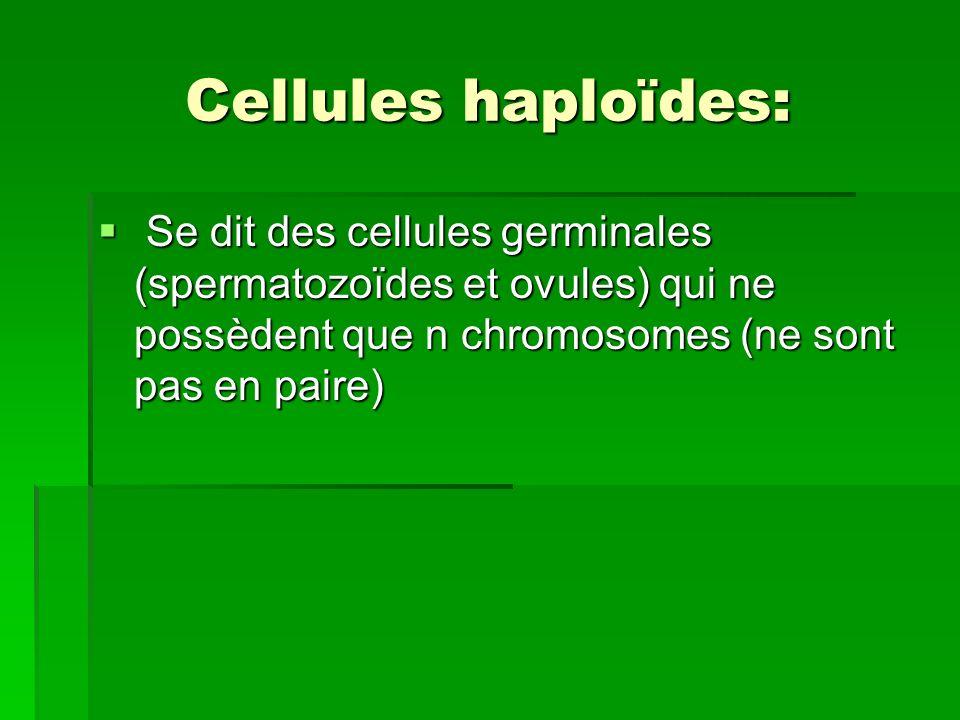 Cellules haploïdes: Se dit des cellules germinales (spermatozoïdes et ovules) qui ne possèdent que n chromosomes (ne sont pas en paire)