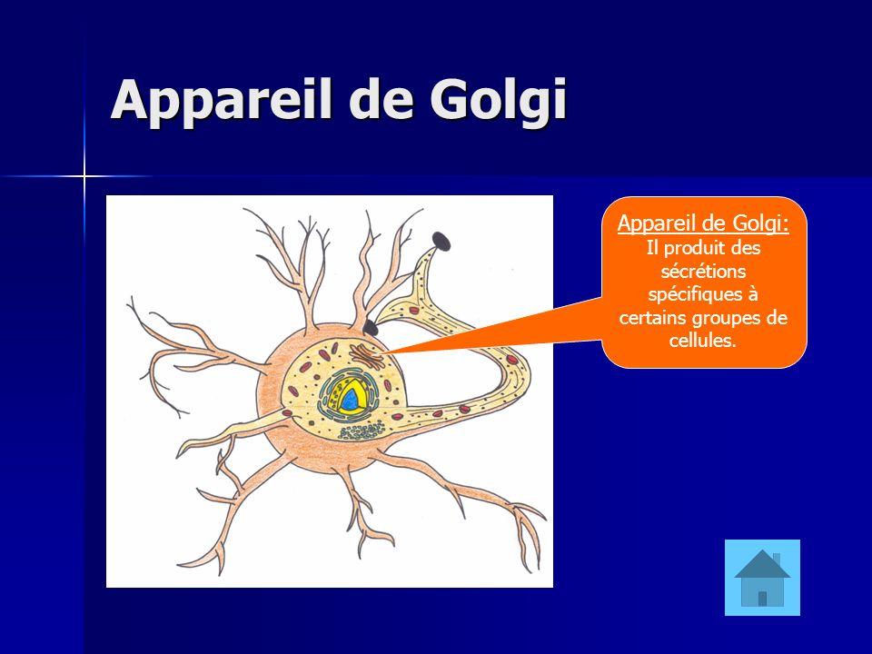 Il produit des sécrétions spécifiques à certains groupes de cellules.