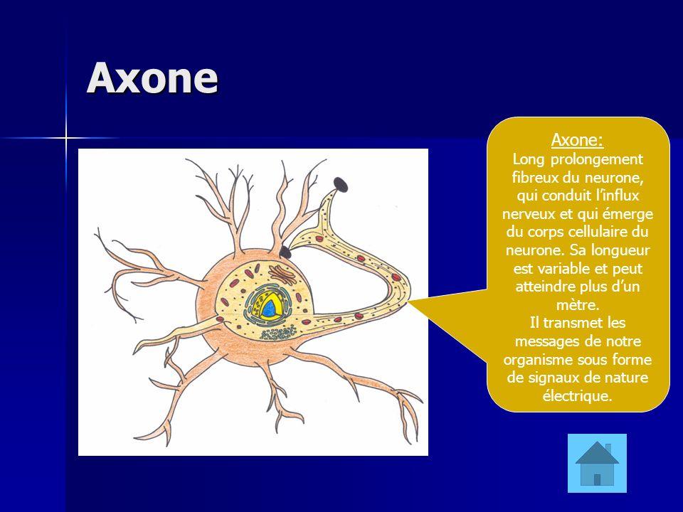 Axone Axone: