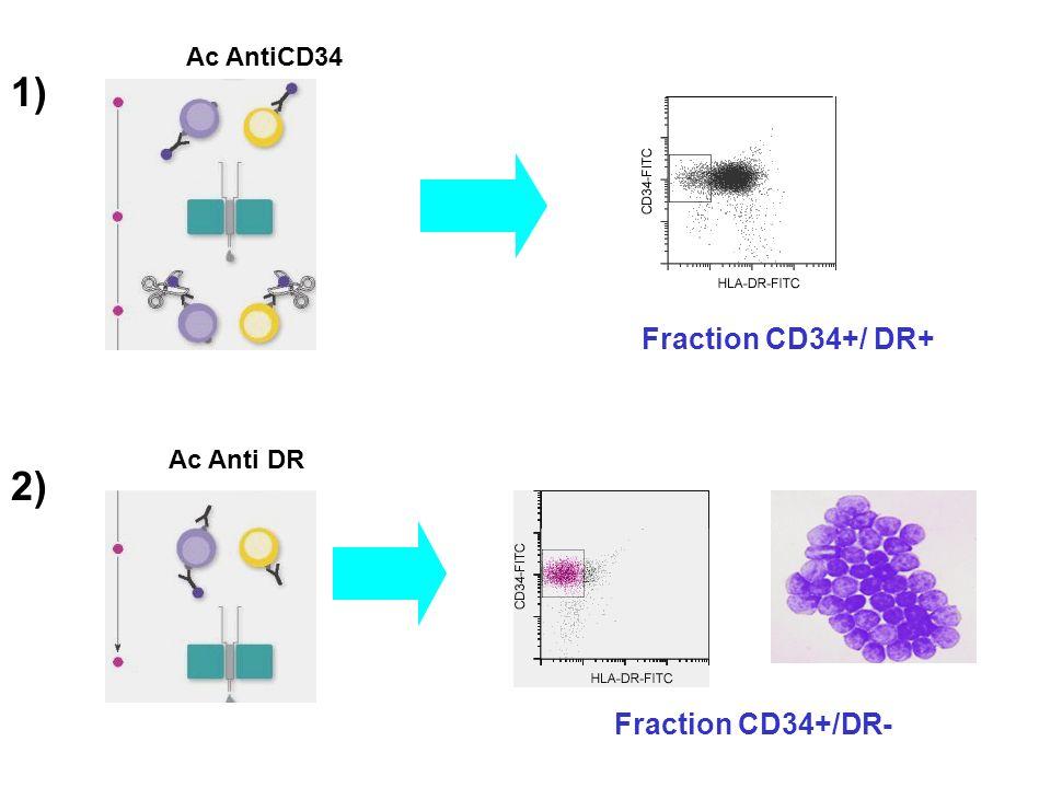 Ac AntiCD34 1) Fraction CD34+/ DR+ Ac Anti DR 2) Fraction CD34+/DR-