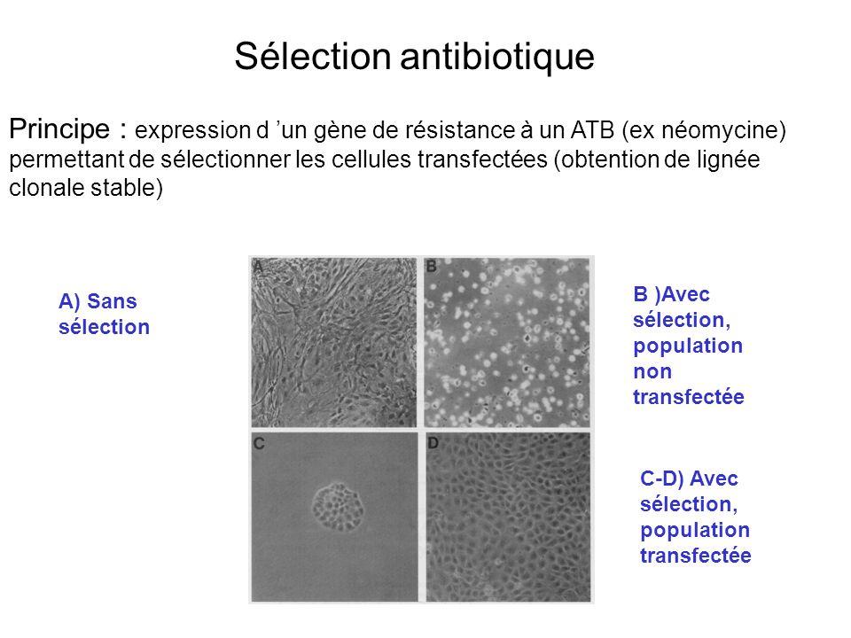 Sélection antibiotique