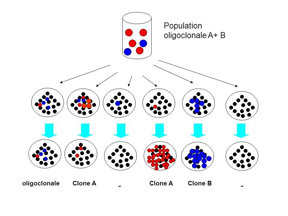 Population oligoclonale A+ B